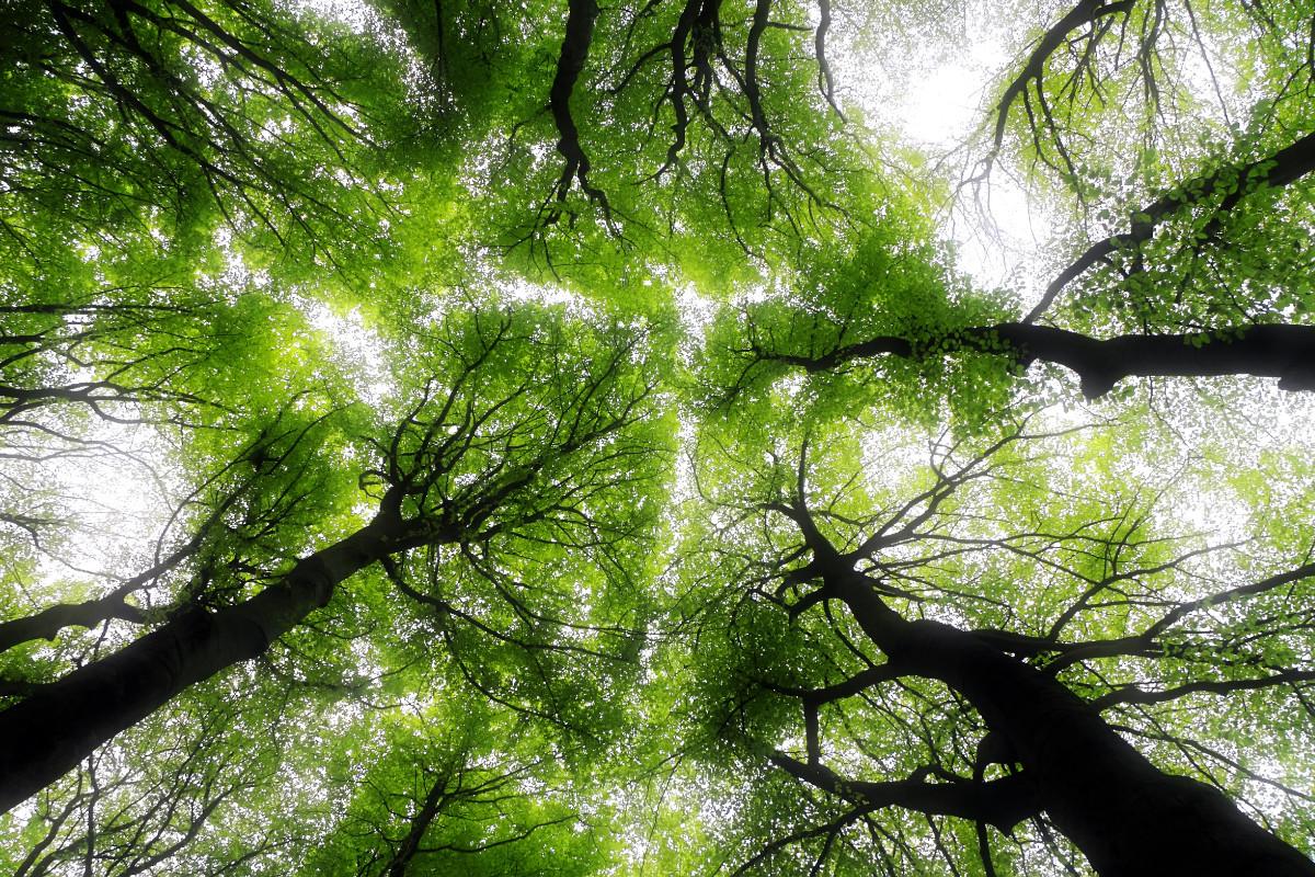 TreesReverseGlobalWarming